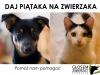 daj-piataka-na-zwierzaka01