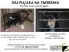 daj-piataka-na-zwierzaka06