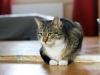 Adaś kot do adopcji Poznań