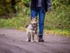 alfi-pies-do-adopcji-poznan-dopiewo-2