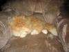 Antek kot perski w 2014 roku