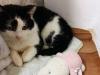 Billuś nieśmiały kot poleca się do adopcji.