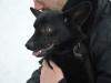 blue-niewielki-pies-adopcja-poznan-10