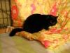 Borys, niepełnosprawny kot do adopcji Poznań