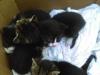 male-kotki-do-adopcji-2