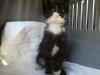 750446992_3_644x461_slodki-edus-szuka-domu-tymczasowego-stalego-koty-bez-rodowodu_rev001