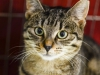 29.11.2015 r. Filipinka piękna kotka do adopcji.
