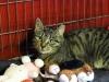 Filipinka piękna kotka do adopcji.