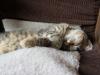 Kotka Gerda w domu tymczasowym.
