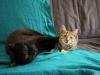 Kot Rysik z kotką Gerdą.