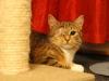 Grace kotka bez oczka do adopcji