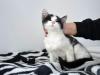Guzik kotek do adopcji