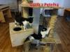 Guzik z Pętelką urocze kociaki podczas wspólnej zabawy