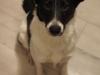 iggy-pies-do-adopcji-poznan-9