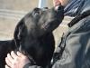 ilaj-pies-do-adopcji-poznan-3