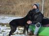 ilaj-pies-do-adopcji-poznan