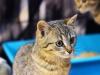 Mała kotka Jaśmina do adopcji