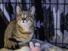 Mała kotka Jawa do adopcji
