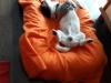 kiwi-pies-do-adopcji-poznan-dopiewo-7