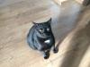 kot-krecik-do-adopcji-na-tymczasie-2