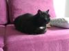 kot-krecik-do-adopcji-na-tymczasie-3