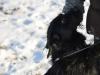 kruczi-maly-czarny-pies-adopcja-poznan-11