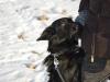 kruczi-maly-czarny-pies-adopcja-poznan-12