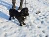 kruczi-maly-czarny-pies-adopcja-poznan-13