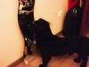kruczi-maly-czarny-pies-adopcja-poznan-15
