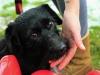 kruczi-maly-czarny-pies-adopcja-poznan-2