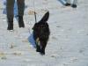 kruczi-maly-czarny-pies-adopcja-poznan-4