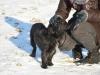 kruczi-maly-czarny-pies-adopcja-poznan-5