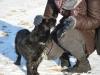 kruczi-maly-czarny-pies-adopcja-poznan-6