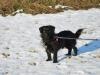 kruczi-maly-czarny-pies-adopcja-poznan-7