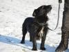 kruczi-maly-czarny-pies-adopcja-poznan-9