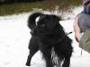 kruczi-maly-czarny-pies-adopcja-poznan