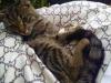 laura-kotka-do-adopcji-poznan-3