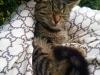 laura-kotka-do-adopcji-poznan