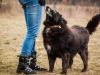 Lucjan, starszy pies do adopcji Poznań