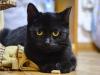 29.11.2015 r. Manila piękna czarna kotka do adopcji.