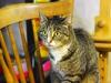 02-11-2015 - Megan czeka na dom tymczasowy