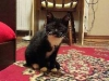 mikado-kotka-do-adopcji-poznan-dopiewo