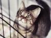 mimi_wredulec-2