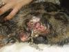 Muszka, kotka do adopcji