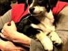 mufinek-szczeniak-do-adopcji-poznan-6