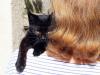 Mała kotka Nuttka.