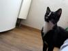 pchla-kotka-do-adopcji-14
