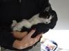 kot, adopcja, kotka, poznań, fundacja dla zwierząt, fundacja koty