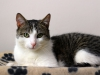 Picanto kot do adopcji Poznań
