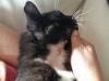 16-08-2016-rabarbar-znowu-czarnym-kotem